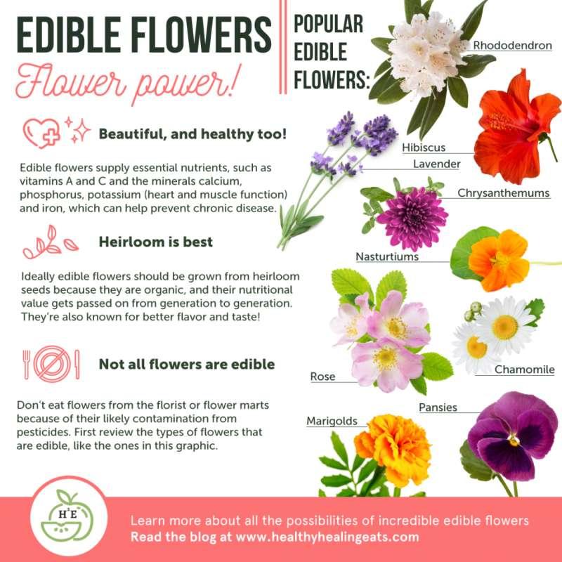 Edible Flowers | Flower Power! | Popular Edible Flowers.