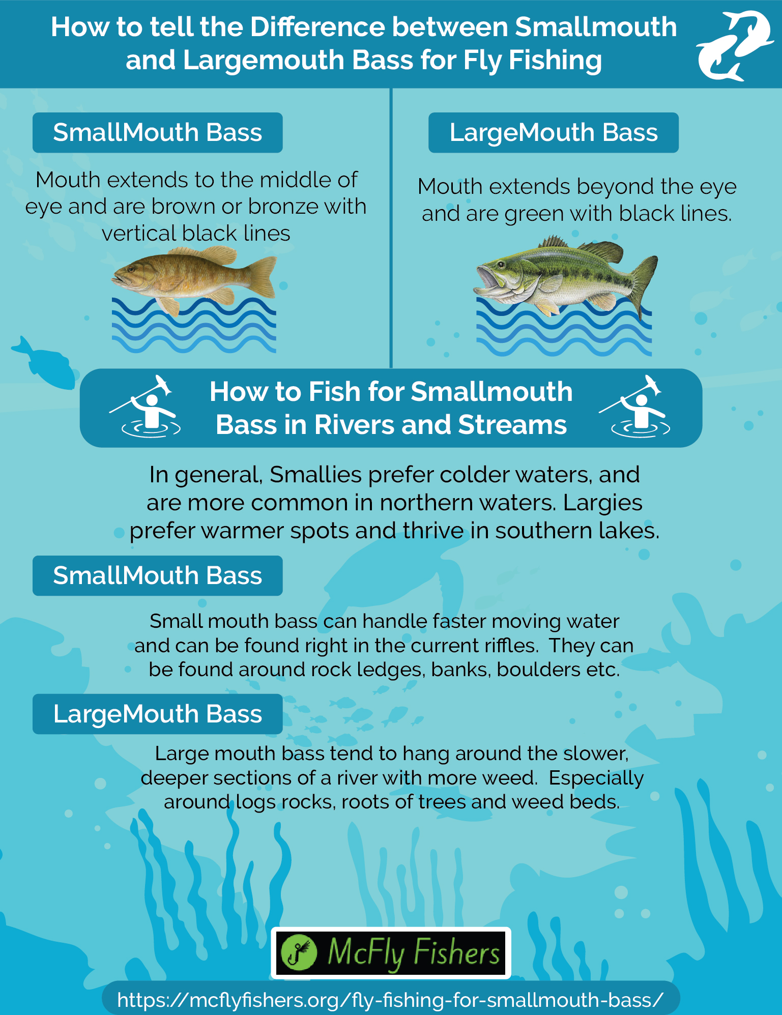 Fly Fishing for Smallmouth Bass in Lakes & Rivers [Infographic]